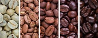 על עצי הקפה והקטיף של פולי הקפה